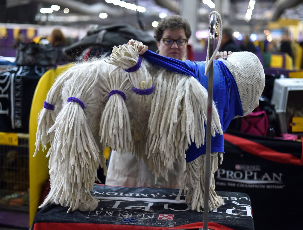 . TOPSHOTS