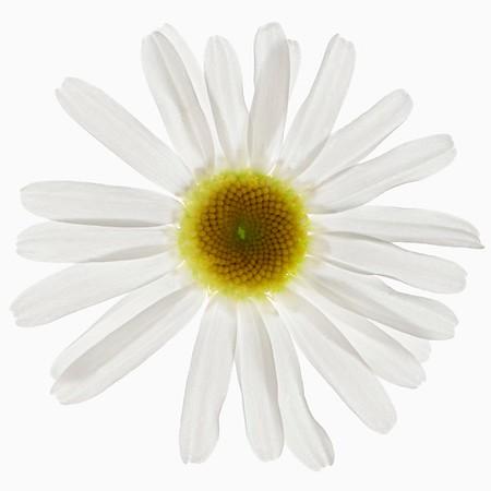 Blumen weiß