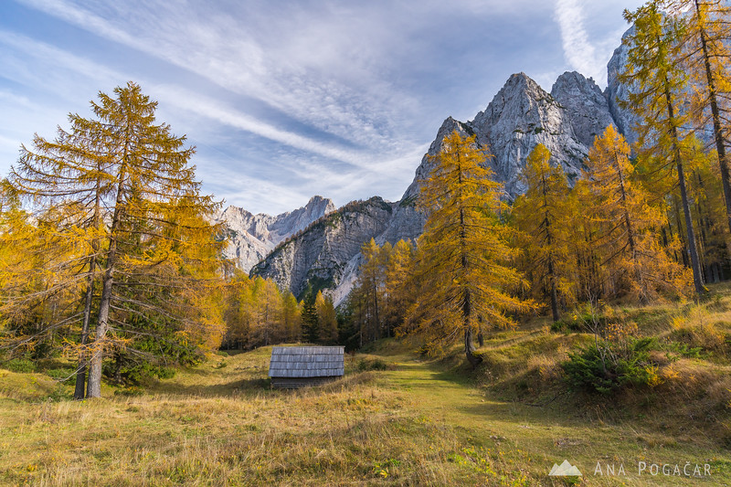 Golden larches on Vršič Pass - Oct 25, 2019