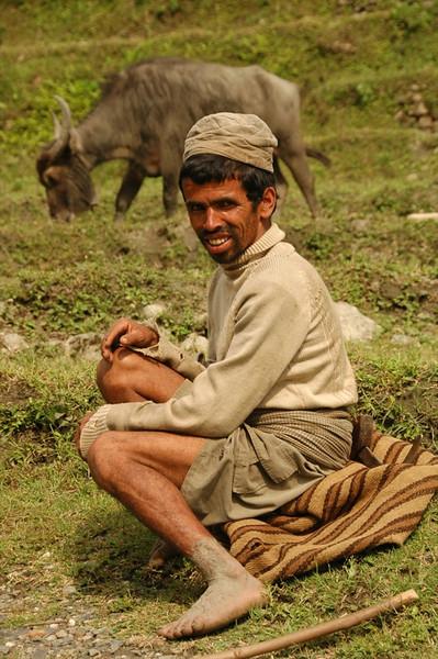 Herding Water Buffalo - Annapurna Circuit, Nepal