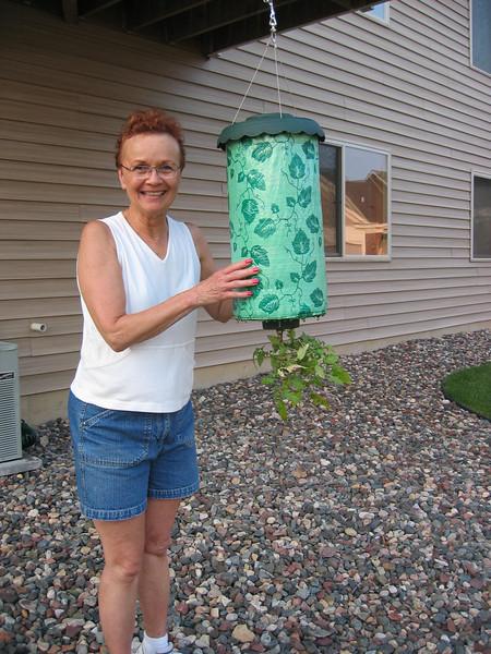 2005-06-26 - Upright Vadis with Topsy Turvey tomato planter