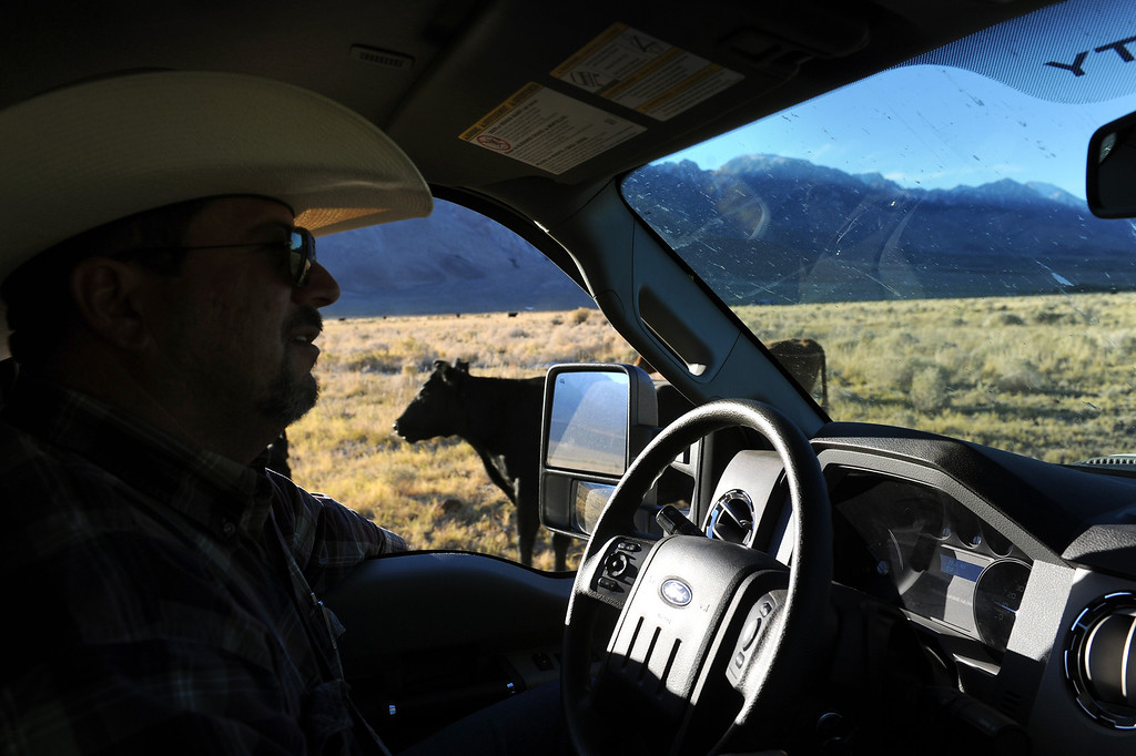 . Rancher Mark Lacey drives his pickup through a cattle ranch in the Owens Valley. (Photo by Michael Owen Baker/L.A. Daily News)