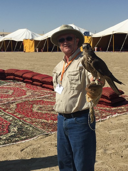 Dick befriends a Qatari falcon in Al Wakrah, Qatar - Bridget St. Clair