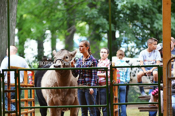 2014 Branch County 4H Fair Beef Showmanship, Breed Classes and Market