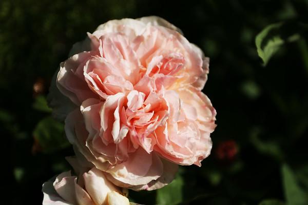 Flowers_060510_0084.JPG