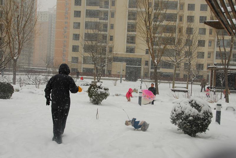 [20100103] 1st 2010 Snow in Beijing (46).JPG