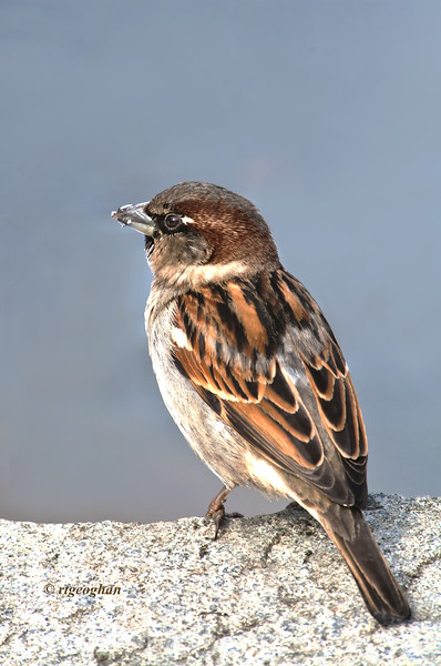 jFeb 13_Sparrow Rock_5783.jpg