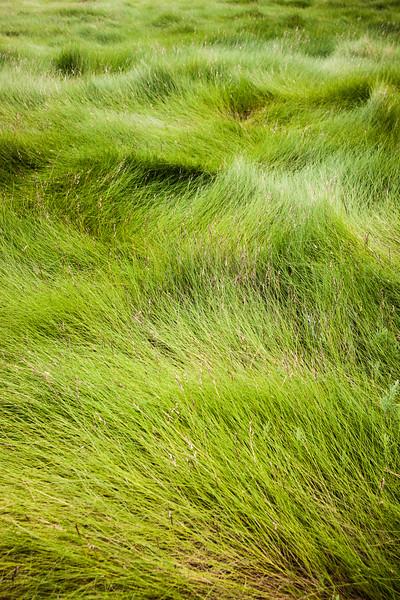 Wellfleet grass.jpg