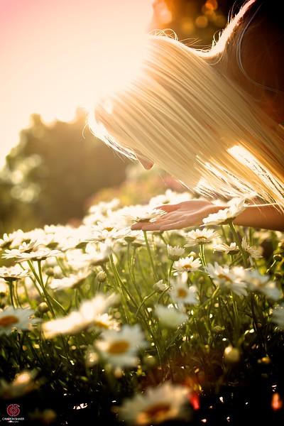 Sun Flower 160.jpg