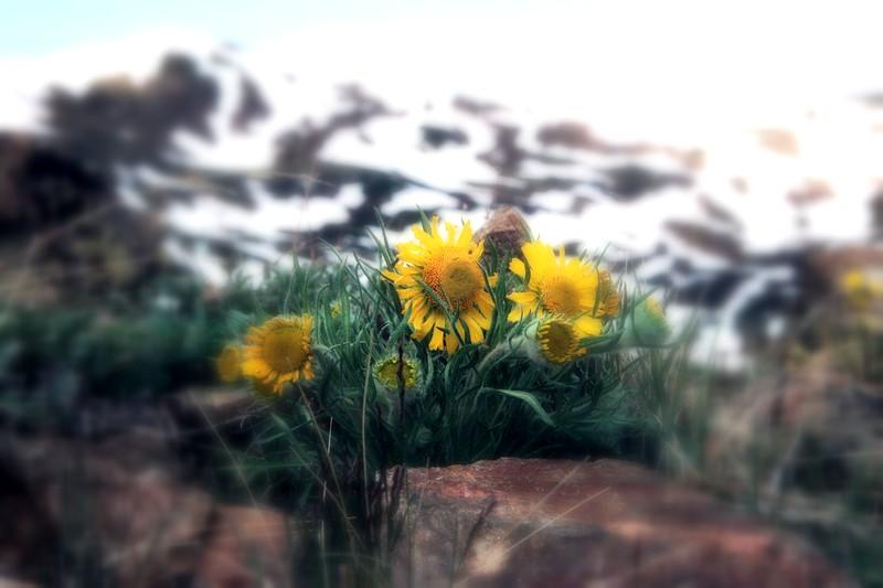 amh FLOWERS (1229).jpg