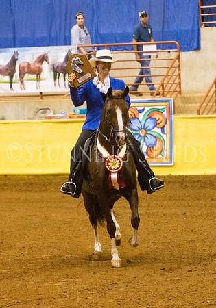 Pleasure Amateur Stallions 7 & over