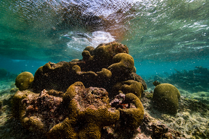 3-15 Snorkeling with Tara Playa del Carmen