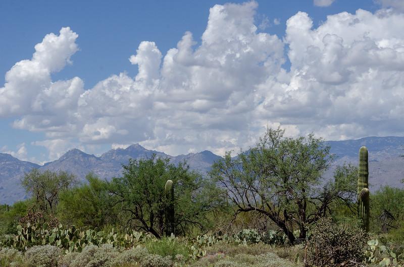 20180902-Saguaro-NP-East-4334.jpg