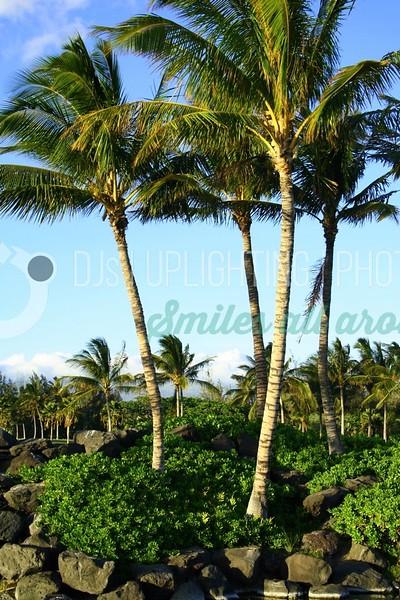 Palms-Garden_batch_batch.jpg