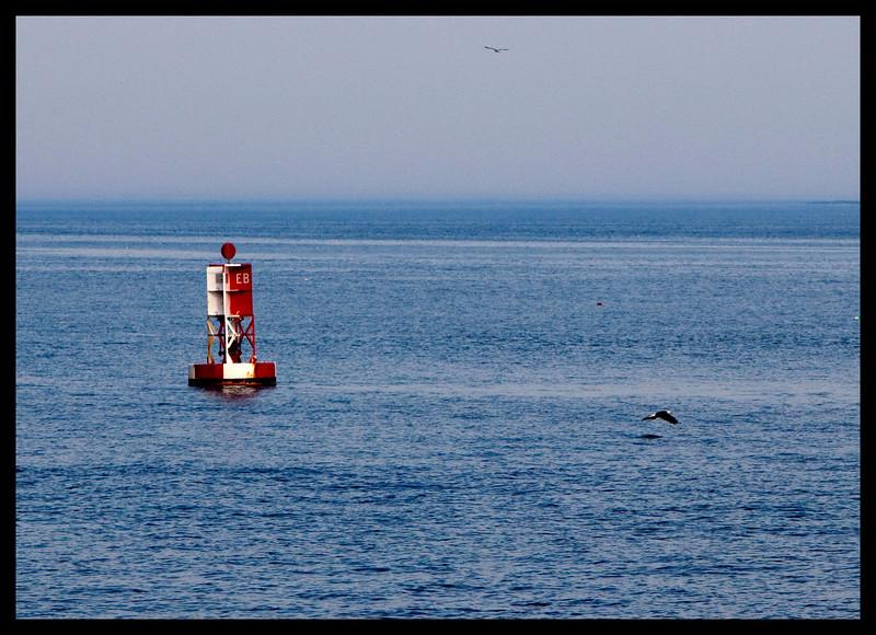 Bald Eagle near Bass Harbor Lighthouse