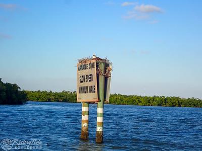 Sunset Bird Rookery Boat Cruise - Kantar, Ricketts & Putney