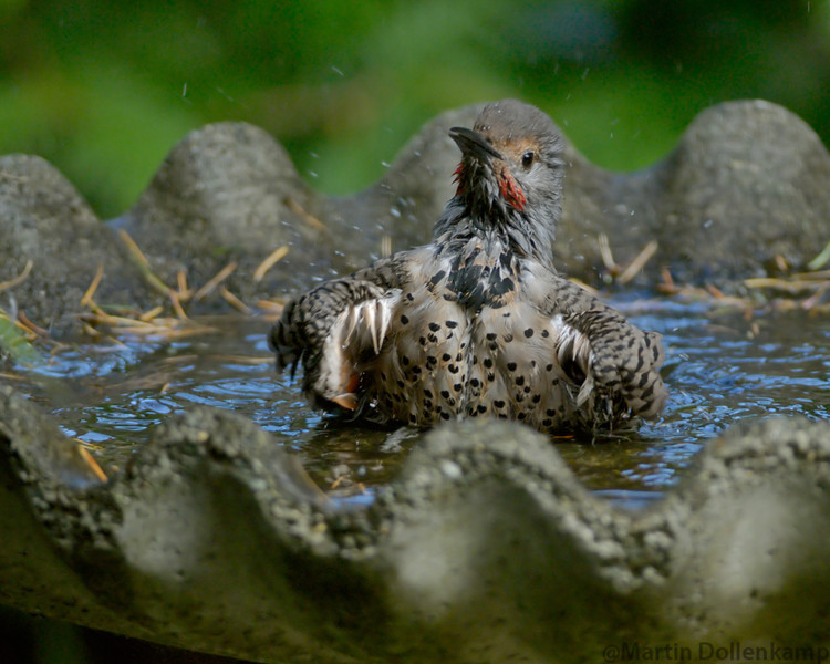 Flicker Bathing.