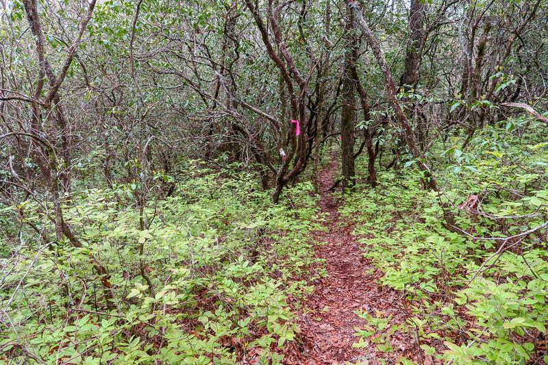 Interim Access Trail -- 2,620'