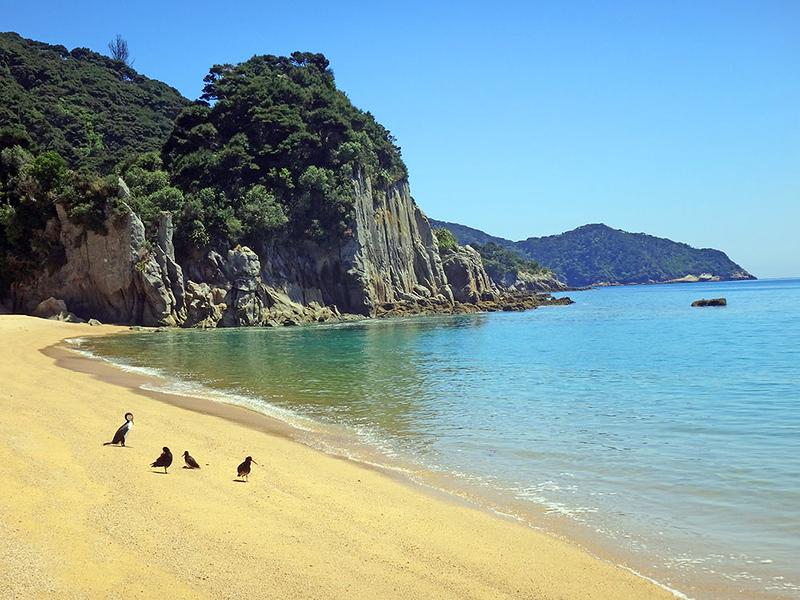 12 Beach N birds.jpg