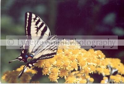 Nature, Scenic & Flowers