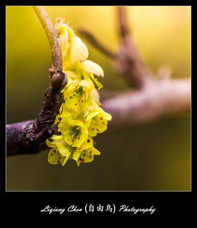 Unknown flower-22