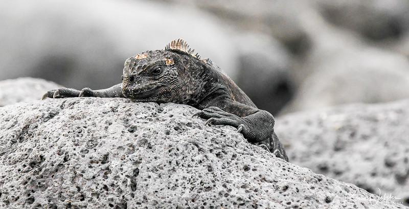 2018 Lobos Island-36.jpg