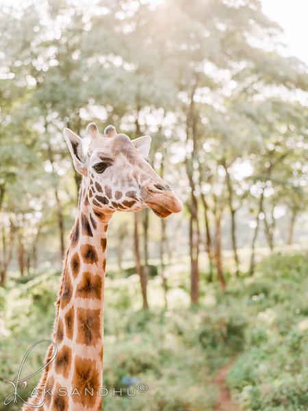 Safari-Africans-077.jpg