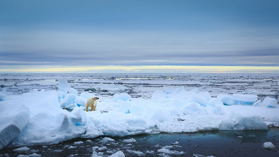 Polar Flux