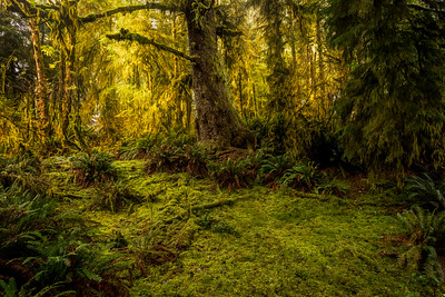 Hike through the Mossy Knoll 11/24/19