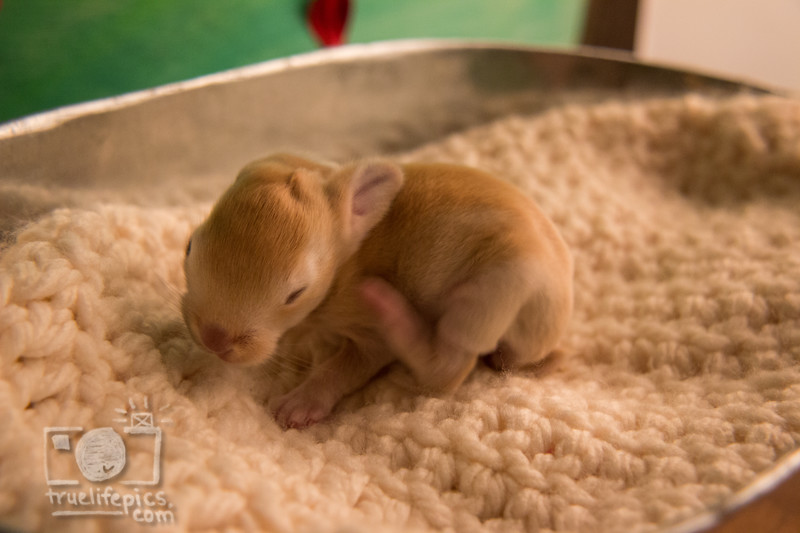August 11, 2016 Meddlesome's One Week Old Kits (3).jpg