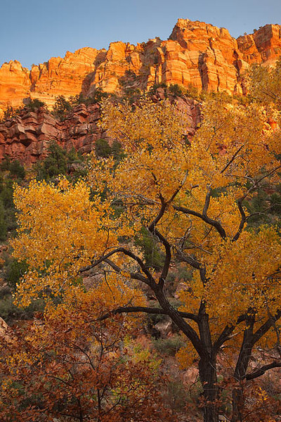 Zion_Cottonwoods_Left_Fork_Subway_3313.jpg