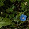 flower-wdsm-30aug15-09x09-006-4714
