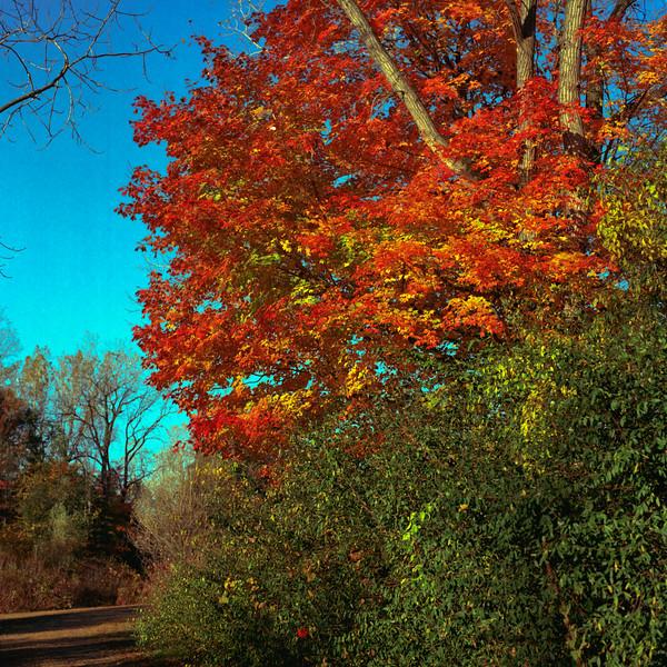 Autumn Hike 120 Film-00051.jpg