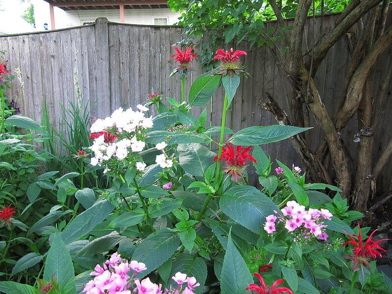 garden-2009-07-0790_std.jpg