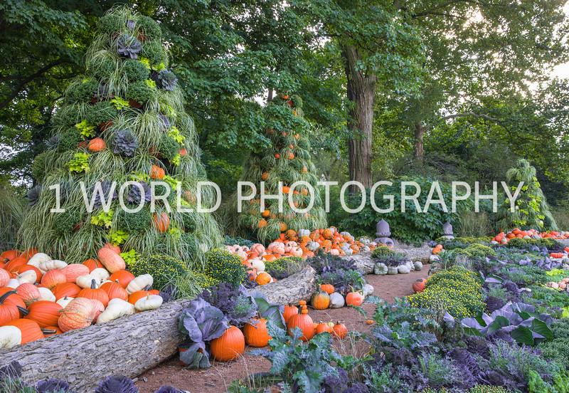Morton Arboretum Fall_16.jpg