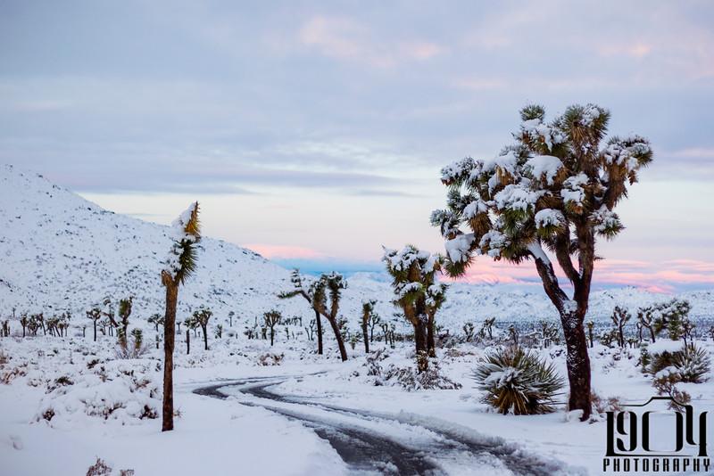 20191227 Joshua Tree Snow C2-91.jpg