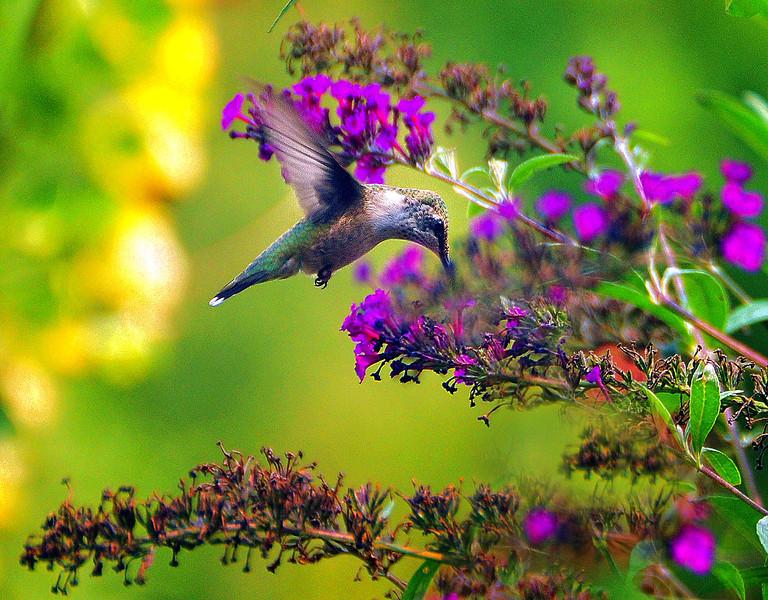 Litle bird  final best  2  .jpg