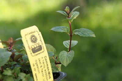 A Visit to Sunnyside Organic Seedlings