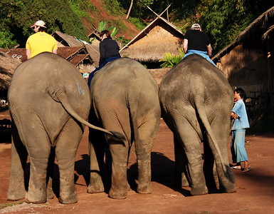 Mahout Program in the Golden Triangle