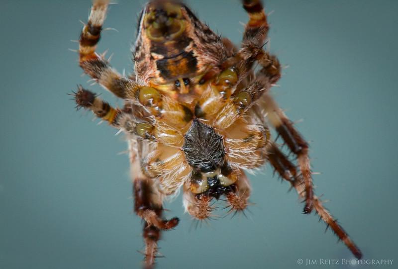 Macro shot - underside of spider