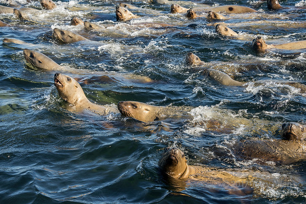 Whales and sea lions