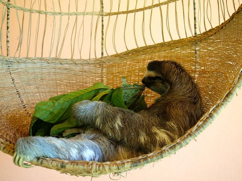 Sloth Sanctuary in Costa Rica