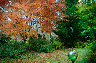 Bertha's Fall Photos November 2013