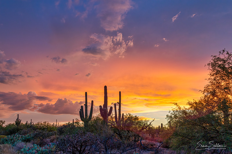 Sabino Sunset 8-1-2019a-.jpg