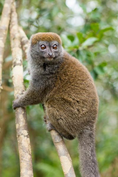 Madagascar_2013_IG3A2368.jpg