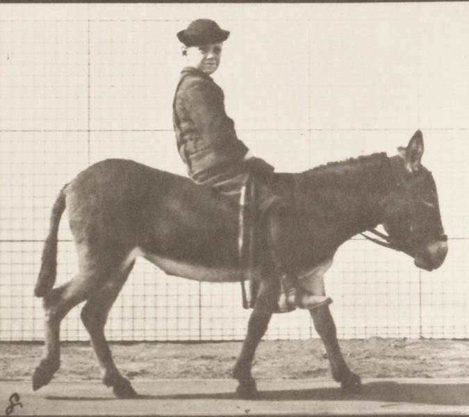 Horse Jennie walking, bareback with rider