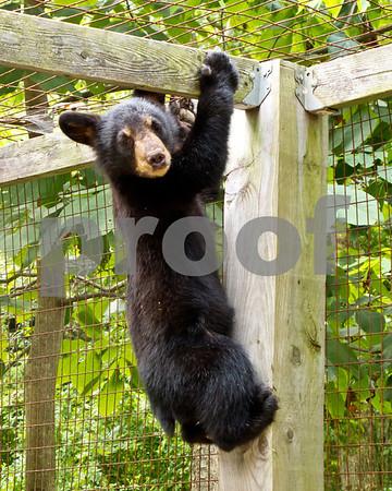 Mammals: Bears