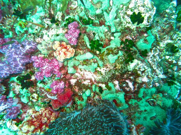 Similan and Surin Islands Dive Trip Days 3  & 4