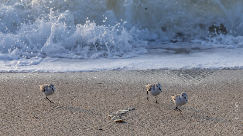 2019-01-01 Low Tide Nature Hike From Moss Beach to Princeton-by-the-Sea, California