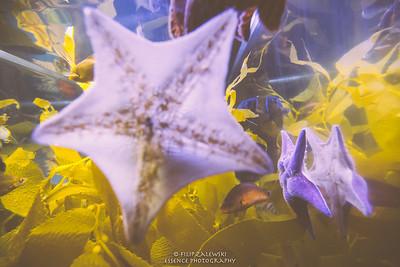 Swimming with the Fishes at Denver Aquarium
